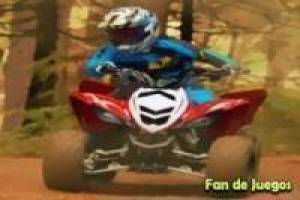 Atv en bosque forestal