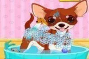 Bathing dogs chihuahuas