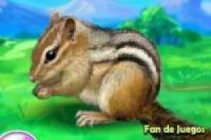 Free Caring for animals: squirrels Game