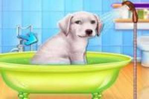 Free Caring for abandoned dogs Game